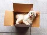 gatto nella scatola si lecca i baffi - 187647343
