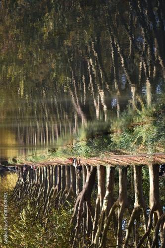 Foto Murales Les platanes du canal du midi