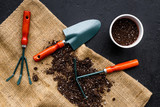 Plant flowers for garden. Tools spade, fork, hand cultivator, hoe and pot with soil on canvas and black background top view - 187652335