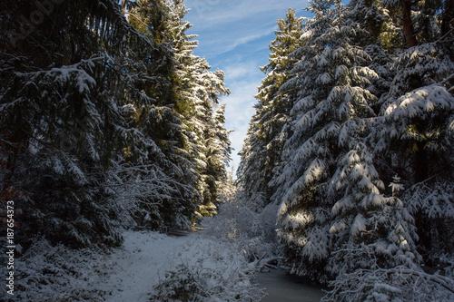 Papiers peints Route dans la forêt Einsamer Weg im Winterwald