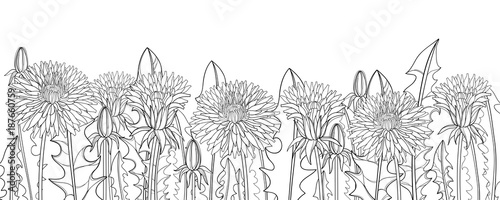Vector horizontal border with outline Dandelion flower, bud and ornate leaves in black isolated on white background. Dandelion field for herbal spring design, coloring book in contour style. - 187660759