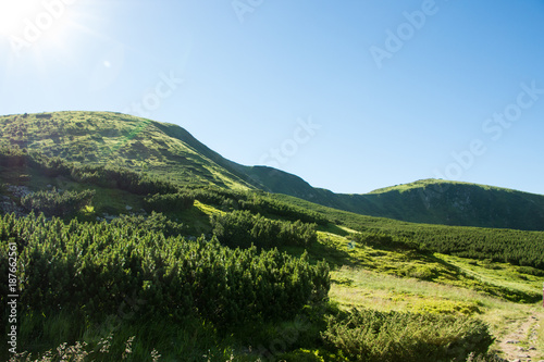 Fotobehang Blauwe hemel Landscape of the mountains and mountain natural green forest. Carpathian mountains. Europe. Ukraine.