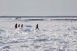 Walking across the Frozen Bay
