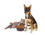 Cat Eating Angry Dogs Food