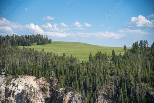 Fotobehang Pistache Trees, Green Grass Prairie and Blue Sky
