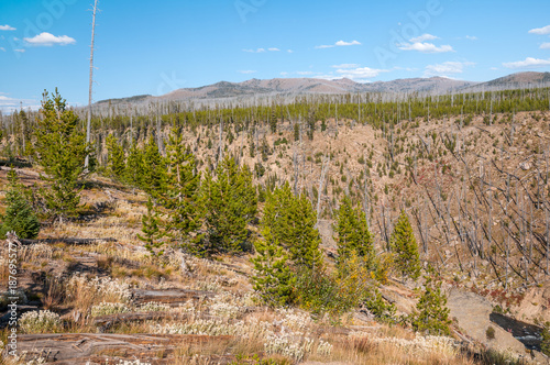 Foto op Aluminium Zalm Yellowstone Landscape