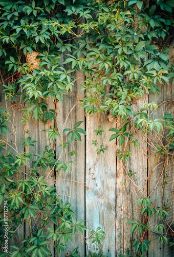 Foto op Aluminium Brandhout textuur Old wooden boards and an abandoned garden