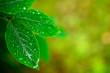 wet spring leaves over defocused background - natural concept