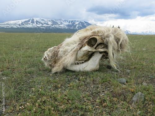 Plexiglas Eagle Mongolia - traditional shepherd lifestyle and landscape in west Mongolia near Kazakhstan boarder line