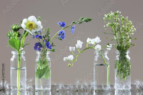Aluminium Paardebloemen wild flowers and herbs
