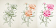 Panoramic view of peony: monochrome colored contour: red flowers, bud, green stems, leaves on vintage background. Botanical illustration for design. Digital draw in engraving style, etching, vector