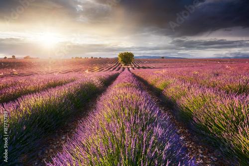 Keuken foto achterwand Lavendel Champ de Lavande, Provence, France