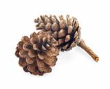 pine cone isolated on white background - 187740997