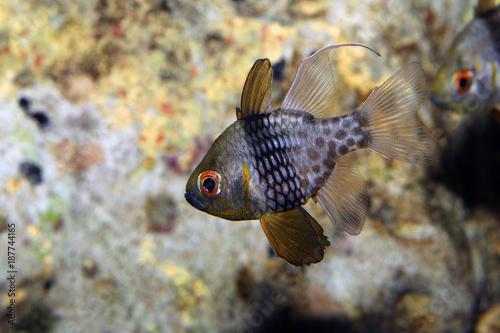 Foto op Canvas Natuur Beautiful salt water fish