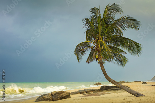 alone palm tree on the sand beach in windy day before sea sorm in Thailand - 187751341