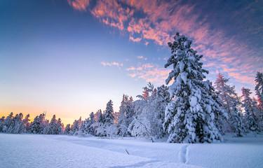 Winter snow forest sunset landscape