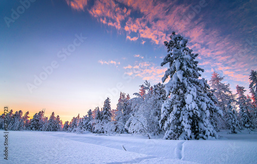 Winter snow forest sunset landscape - 187754723