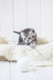 Young adorable kitten sitting in a basket.