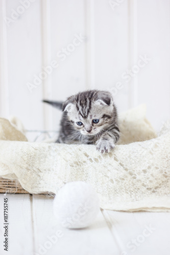 Young adorable kitten sitting in a basket. - 187755745