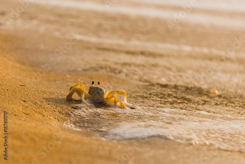 Crab running out of the water