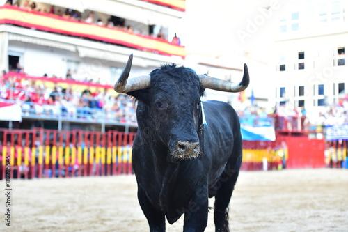Foto Murales toro