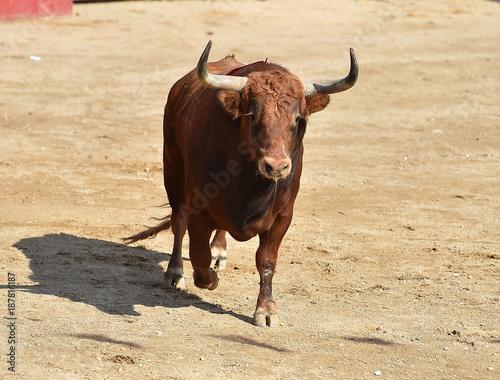 Staande foto Stierenvechten toro