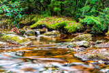 Red creek in Dolly Sods, West Virginia during autumn, fall with green pine tree forest and smooth water river, waterfall ripples fallen leaves on rocks, stones - 187816998