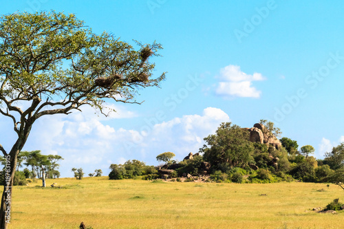 Foto op Canvas Pool Endless savanna of Serengeti. Hill and trees and blue sky. Tanzania, Africa