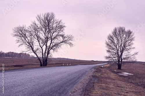 Foto op Canvas Lavendel Long road. Trees on roadside