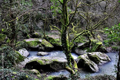 Papiers peints Rivière de la forêt NATURA INFINITA