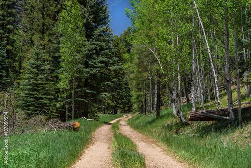 Papiers peints Route dans la forêt The North Rim