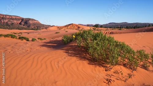 Fotobehang Koraal Coral Pink Sand Dunes