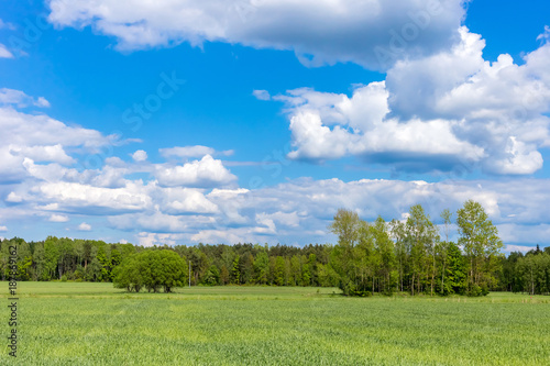 Staande foto Pistache Landscape with trees and a blue cloudy sky