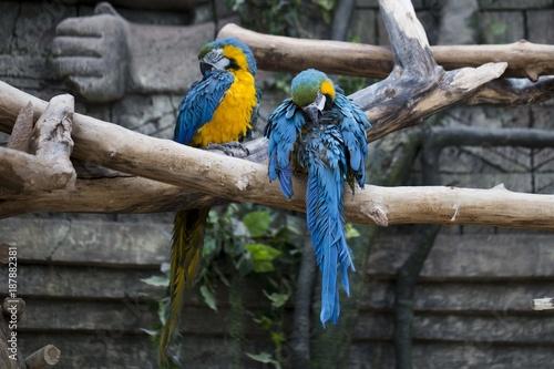 Aluminium Papegaai попугай ара пара
