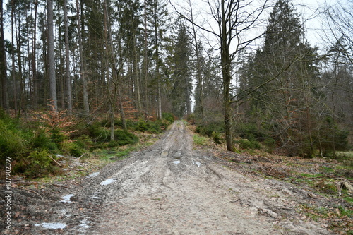 Papiers peints Route dans la forêt winter impressions from darzlubie, a small village in kashubia, picture of a forest trail of this region, pomerania, poland,