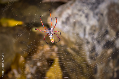 Yellow and orange female Golden orb-web spider (Nephila spp.) sitting on a web, Nosy Komba, Madagascar - 187911384