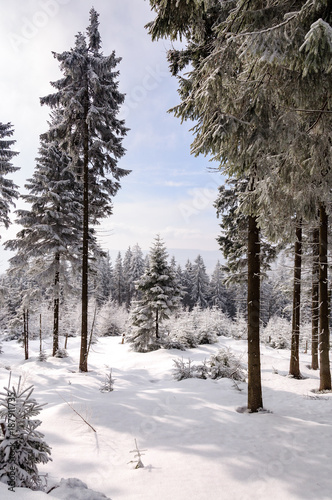 Fotobehang Zwart winter landscape with snow on trees