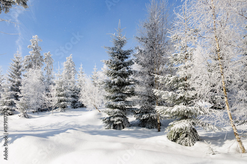 Foto op Canvas Wit winter landscape with snow on trees