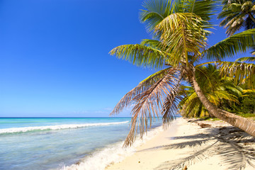 Tropical sand beach with palm trees, Dominican Republic