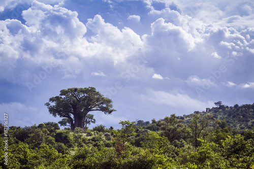 Foto op Plexiglas Baobab Savannah landscape in Kruger National park, South Africa