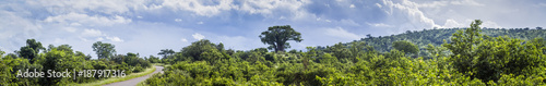 Savannah landscape in Kruger National park, South Africa
