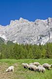 Schafherde in den Dolomiten - 187918156