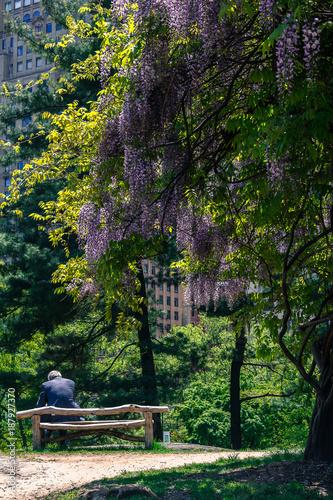 Foto Murales homem sozinho no parque