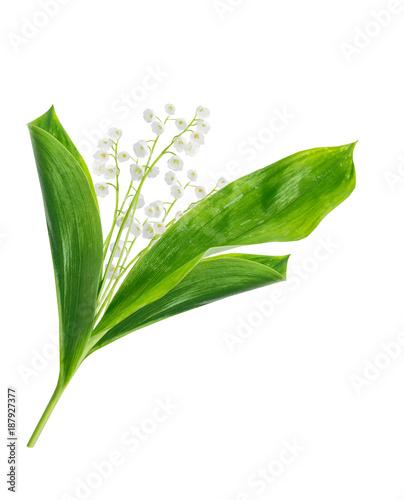 Staande foto Lelietje van dalen Lily of the valley flower on white background