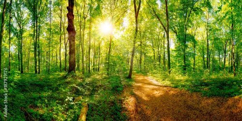 Fototapety, obrazy : Path through a spring forest in bright sunshine