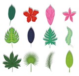 set of summer and trendy tropical leaves  - 187931508