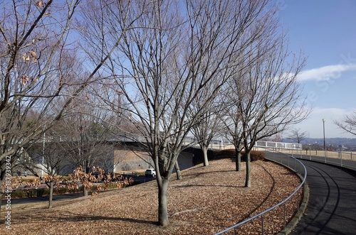 Foto Murales 冬の公園