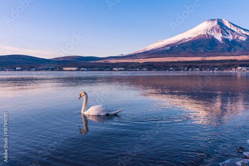 Fotobehang Zwaan Swan in lake yamanaka with Mt.Fuji background