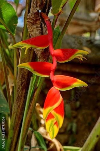 Fotobehang Bali Drachenblume