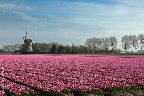Fotobehang Tulpen Springtime in Holland